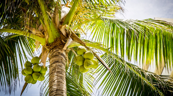 Why coconut oil is good for your body?