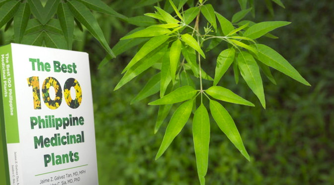 Philippine Herbs: LAGUNDI