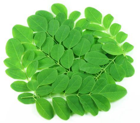malunngay-leaves